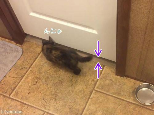 子猫がドアの下を通り抜ける00