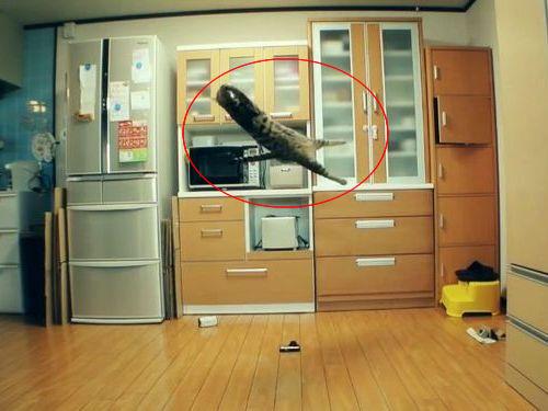 猫が空中でスーパーキャッチ00
