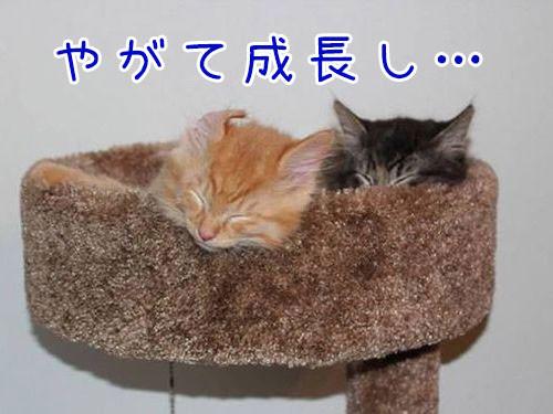 ベッドをシェアしていた子猫2匹00