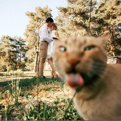 猫が記念撮影の嫌がらせをするとき01