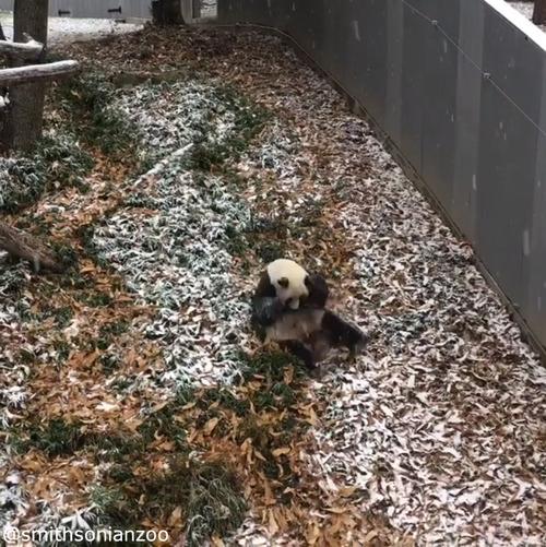 雪遊びパンダ04