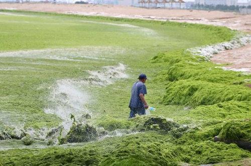 中国の緑の海11