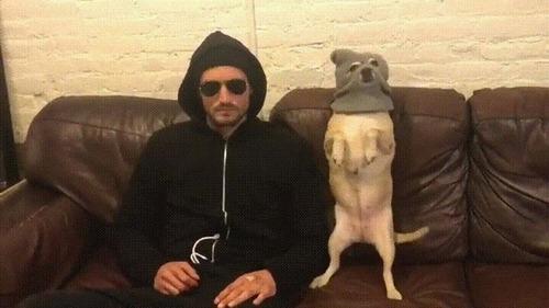 悪い犬と飼い主04