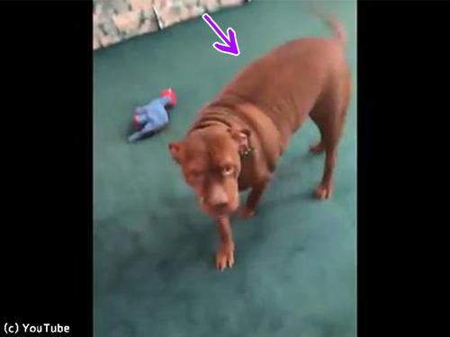 犬「背中がかゆい…」→こんな行動に出る00