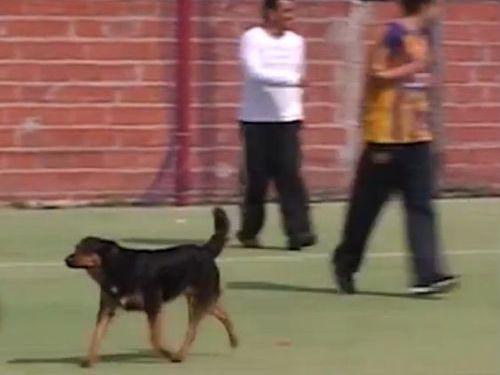 サッカーでゴールを決めた犬01