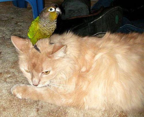 インコと猫14