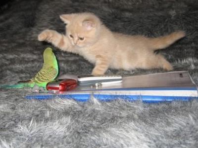 破壊力抜群の猫とインコ画像01