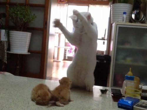 子猫と猫01