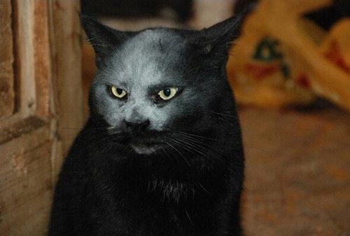 小麦粉をかぶった黒猫01