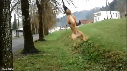 犬のダイナミックなひとり遊び03