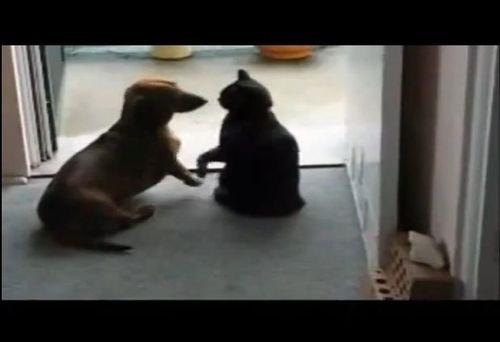 落ち着きのない犬をおとなしくさせる猫01
