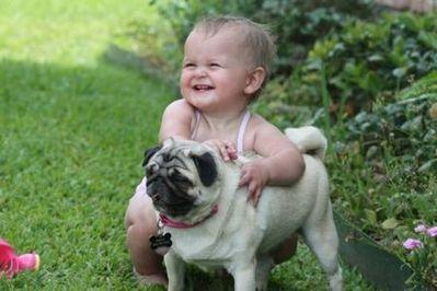 パグと赤ちゃん09