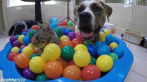 カラーボールと猫06