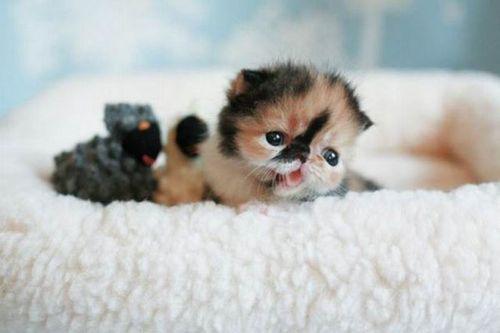 ぶさかわいい猫07