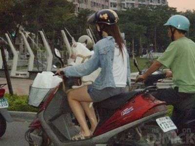 自転車やバイクに乗る犬たち07