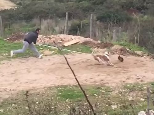 訓練された犬のジャンプ力07