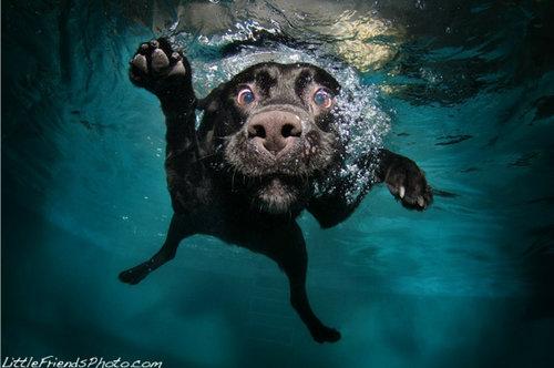 水中の犬05