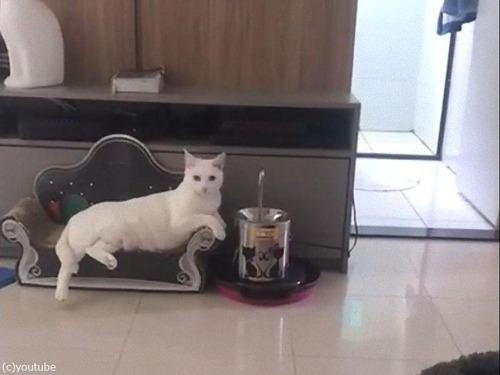 最も優雅に水を飲む猫03