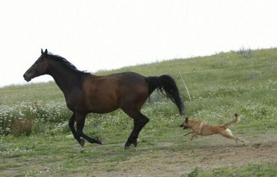 馬と犬01