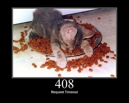 猫でHTTPステータスコード11