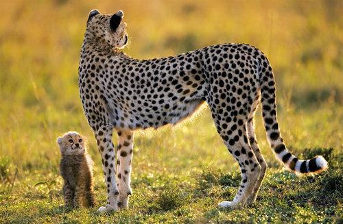 08動物の親子