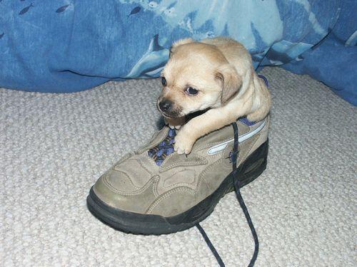 靴の中の犬02