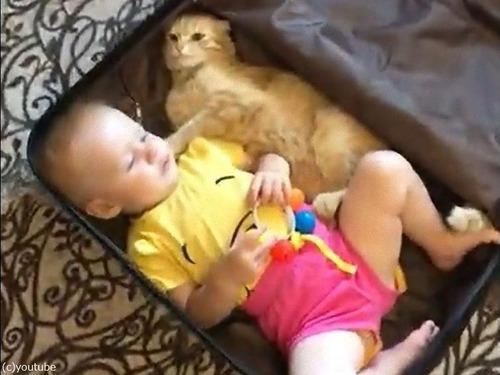 猫と赤ちゃんが一緒にスーツケース