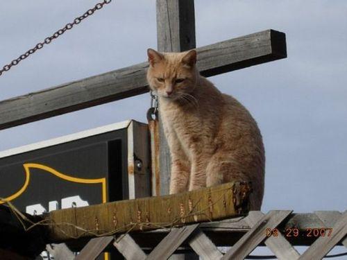 猫市長13