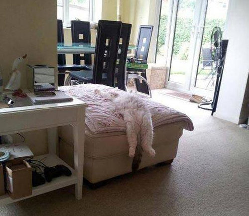 どこでも眠る猫13