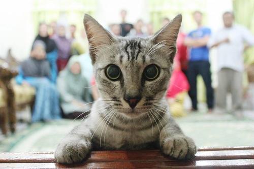 猫のいる家でファミリー写真01