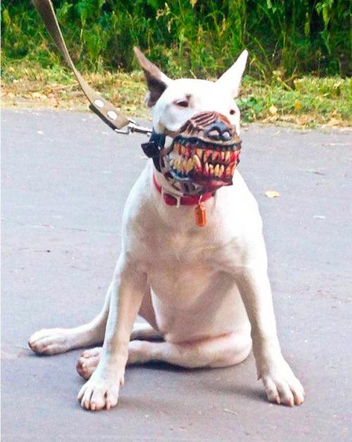 犬の口輪01