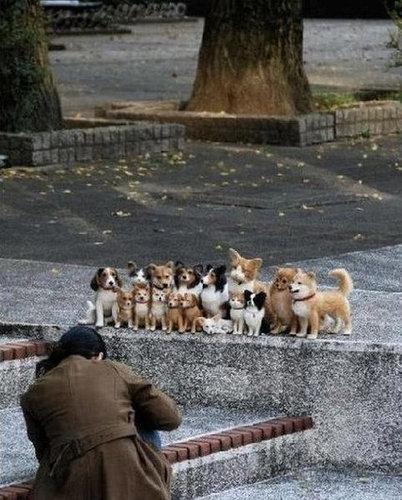 05並んだり列になったりしている動物たち