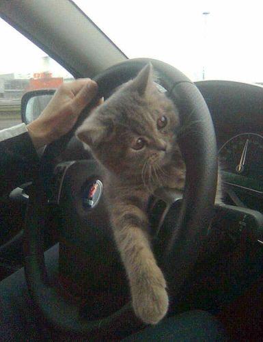 ロシアの危険な運転01