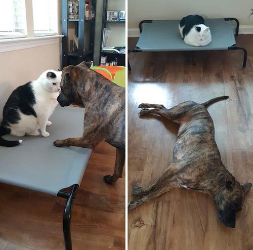 猫にベッドを奪われた犬たち16