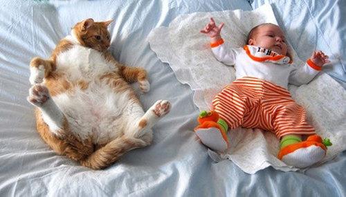 猫の寝方08