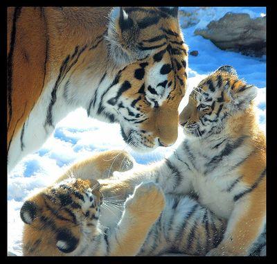 虎の子02