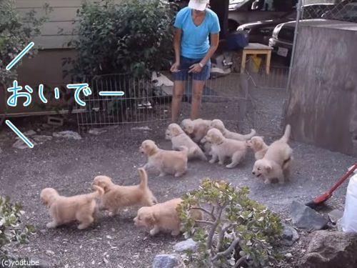 子犬11匹00