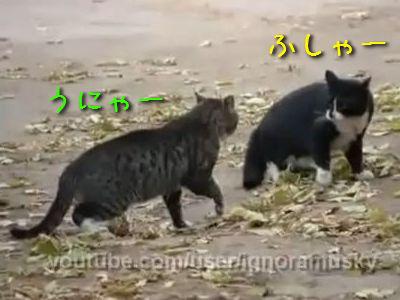猫の争いを止める犬
