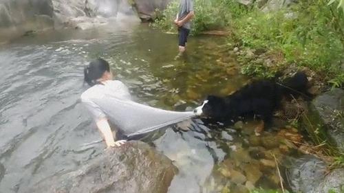 泳がせてくれない犬03