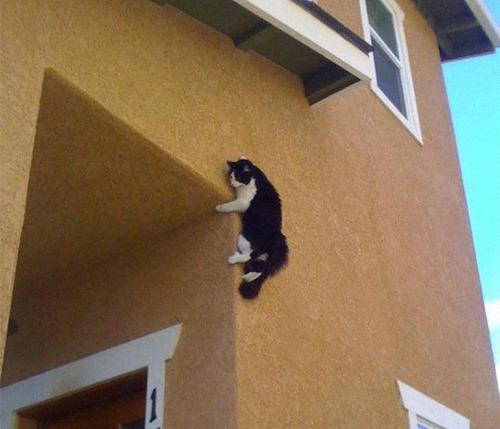 重力を無視する猫12