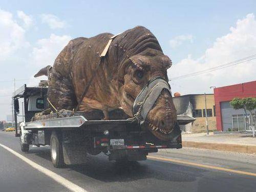 道路で恐竜に遭遇02