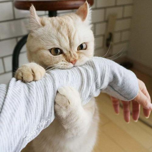 猫に襲われる人々01