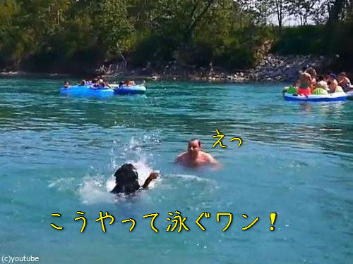 豪快に泳ぎを教えてくれる犬00