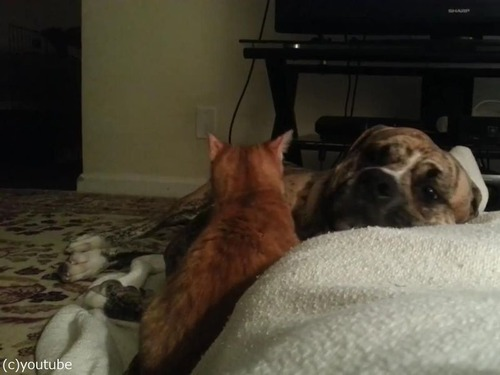 犬と猫が出会って2週間後01