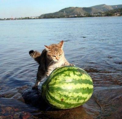 こんな猫はいやだ07