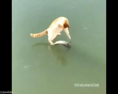 魚とれない猫03