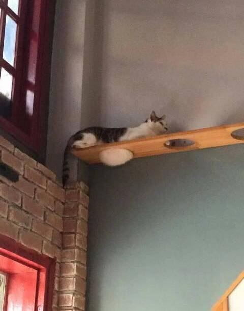 太った猫にぴったりの座り場所01