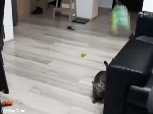 キャッチボール上手な猫00