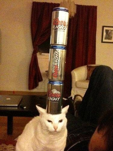 バランス猫16