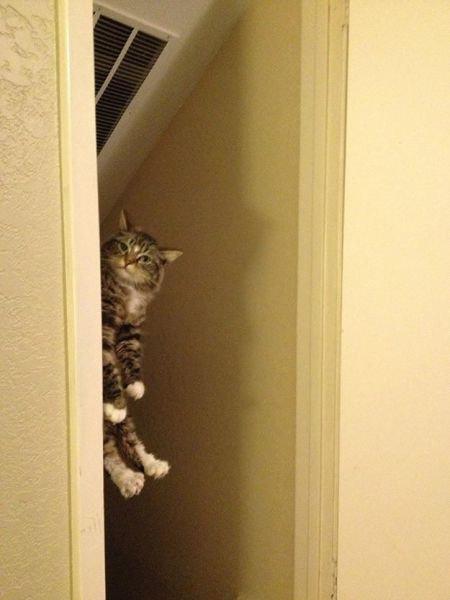 猫の謎の行動07